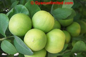 Lemon for dyspepsia
