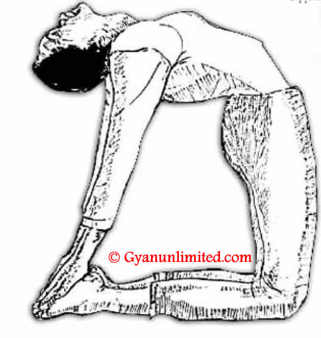 How To Do Ustrasana Yoga Step By Step And What Are Its Benefits