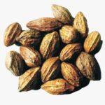 Wonder Uses and Benefits of Myrobalan (Terminalia chebula)